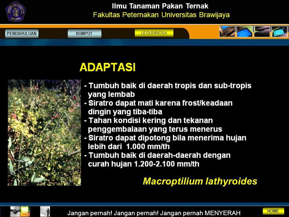 Ilmu Tanaman Pakan Ternak Macroptilium lathyroides
