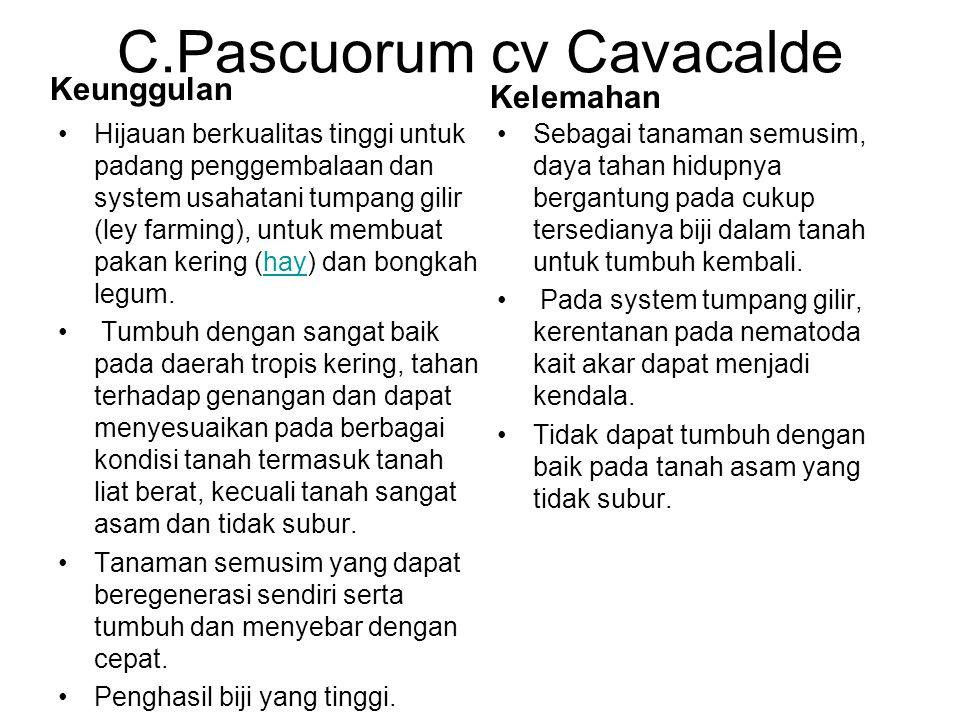 C.Pascuorum cv Cavacalde