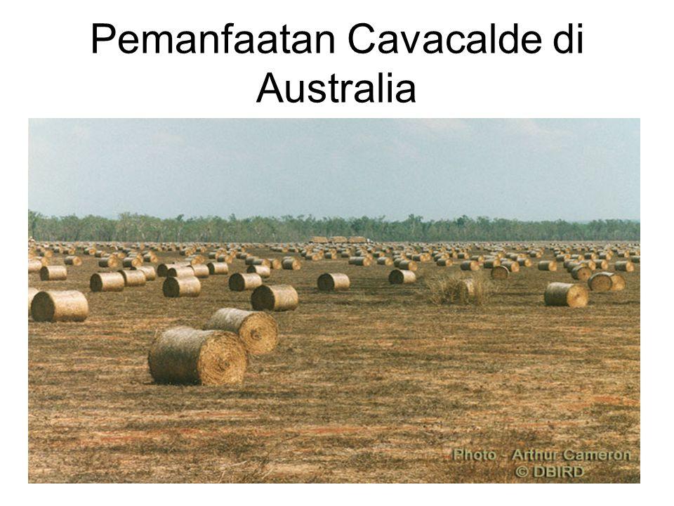 Pemanfaatan Cavacalde di Australia