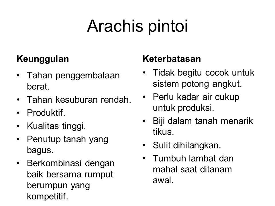 Arachis pintoi Keunggulan Keterbatasan Tahan penggembalaan berat.