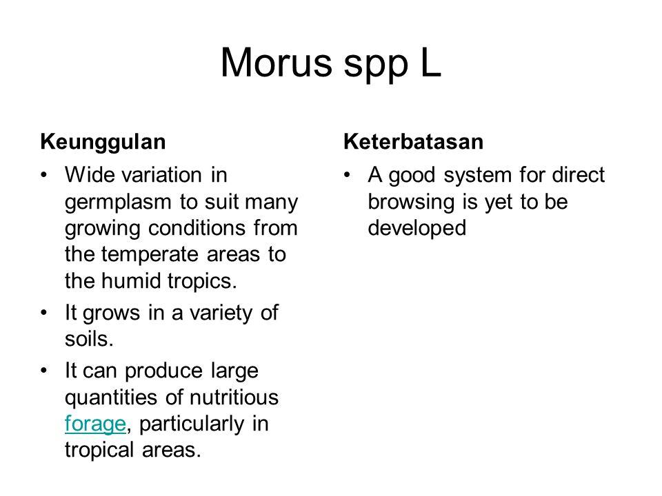 Morus spp L Keunggulan Keterbatasan
