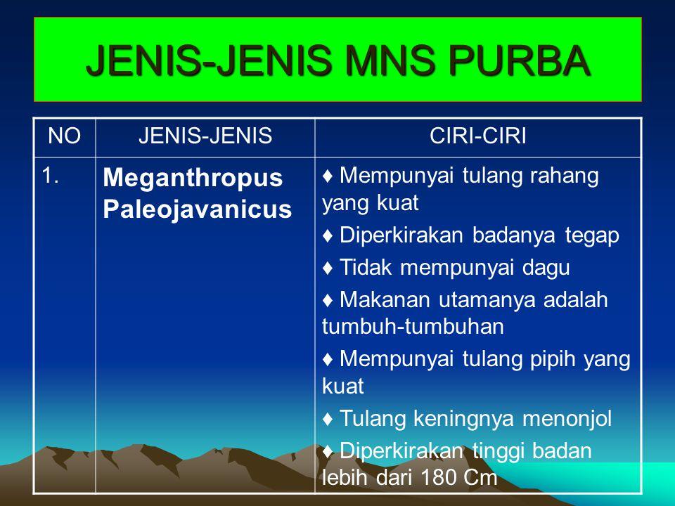 JENIS-JENIS MNS PURBA Meganthropus Paleojavanicus NO JENIS-JENIS