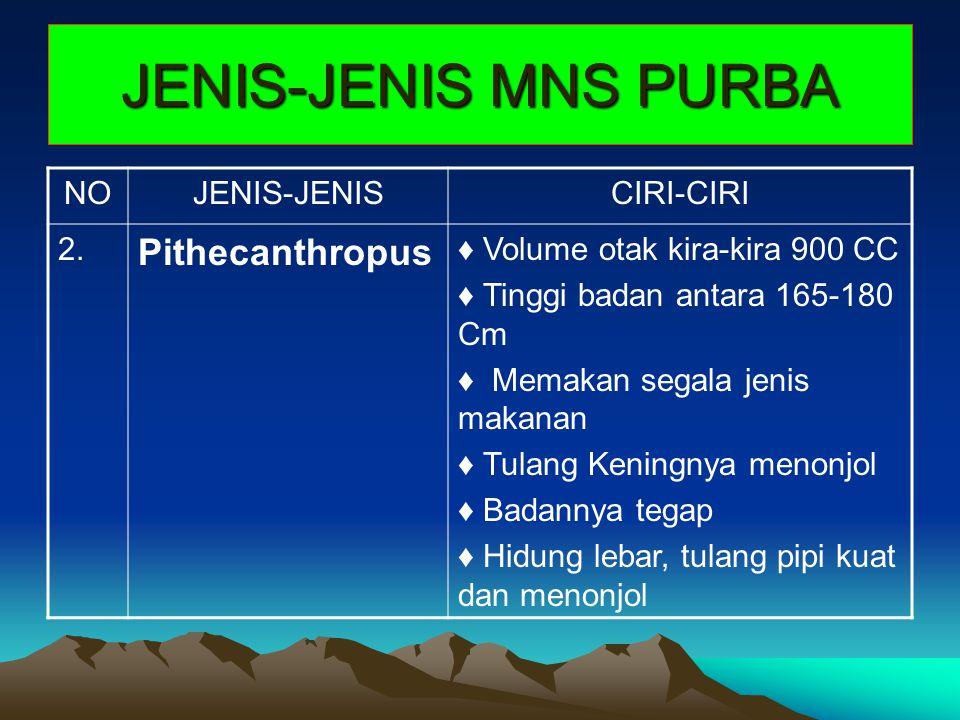 JENIS-JENIS MNS PURBA Pithecanthropus NO JENIS-JENIS CIRI-CIRI 2.