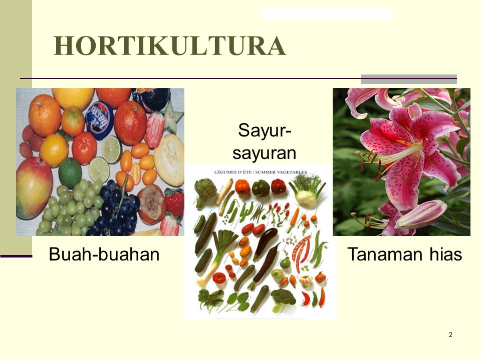 HORTIKULTURA Sayur-sayuran Buah-buahan Tanaman hias