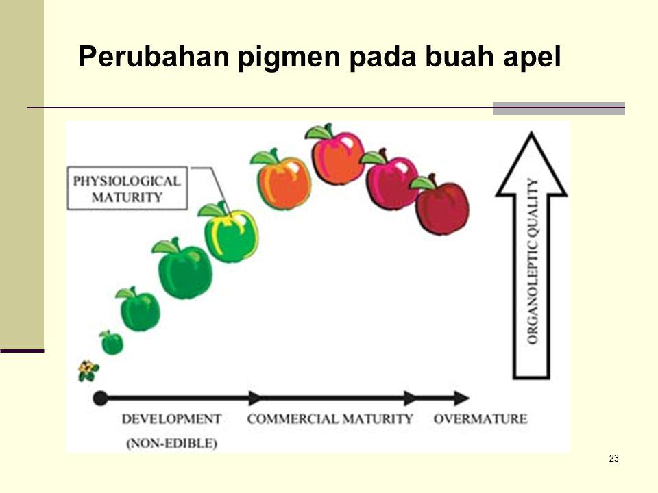 Perubahan pigmen pada buah apel