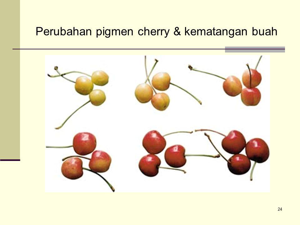 Perubahan pigmen cherry & kematangan buah