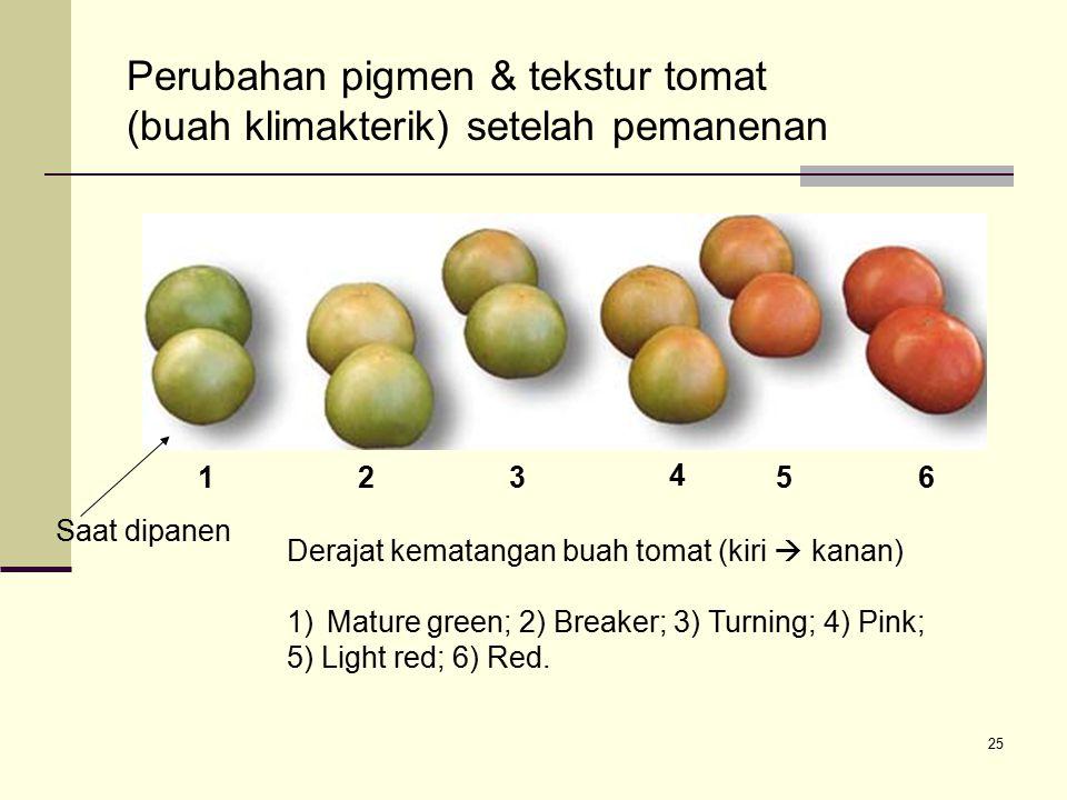 Perubahan pigmen & tekstur tomat (buah klimakterik) setelah pemanenan