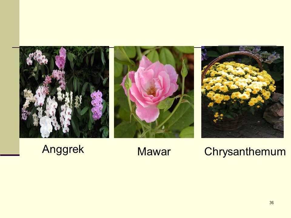 Anggrek Mawar Chrysanthemum