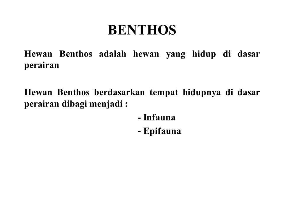 BENTHOS Hewan Benthos adalah hewan yang hidup di dasar perairan
