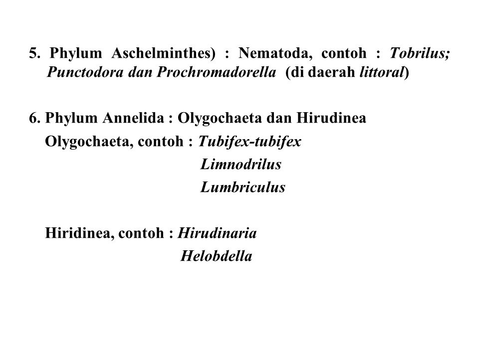 5. Phylum Aschelminthes) : Nematoda, contoh : Tobrilus; Punctodora dan Prochromadorella (di daerah littoral)