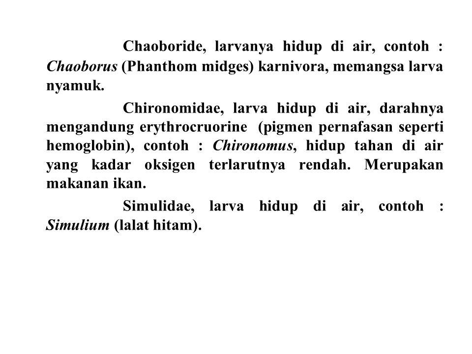 Chaoboride, larvanya hidup di air, contoh : Chaoborus (Phanthom midges) karnivora, memangsa larva nyamuk.