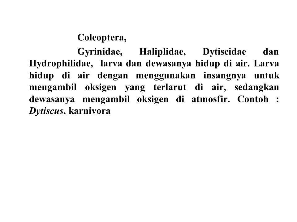 Coleoptera,