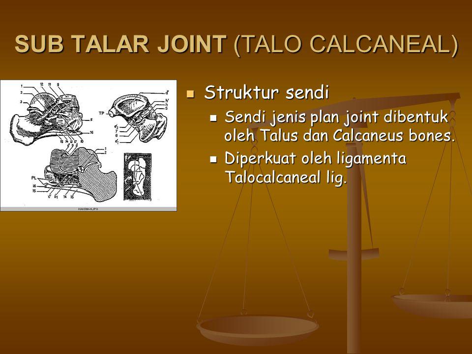 SUB TALAR JOINT (TALO CALCANEAL)