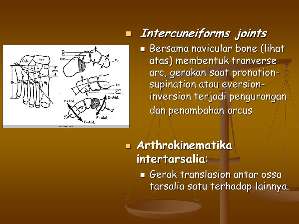 Intercuneiforms joints