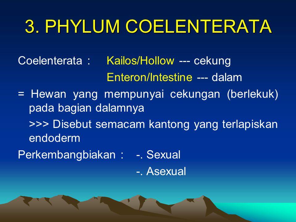 3. PHYLUM COELENTERATA Coelenterata : Kailos/Hollow --- cekung