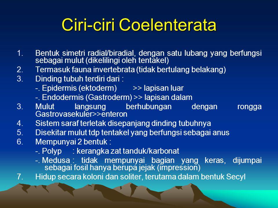 Ciri-ciri Coelenterata