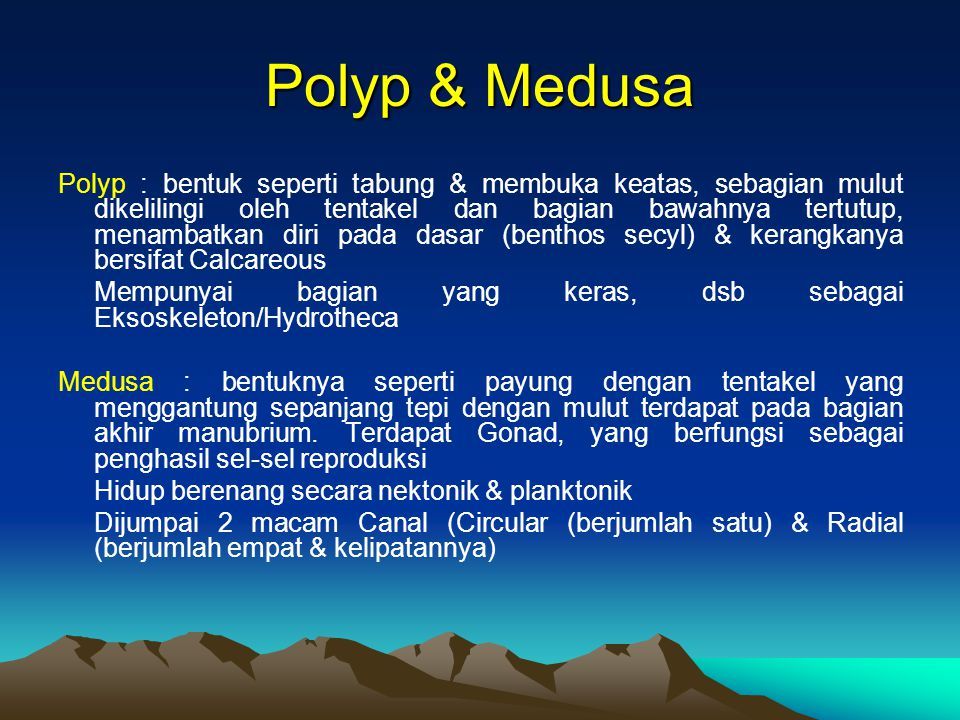 Polyp & Medusa