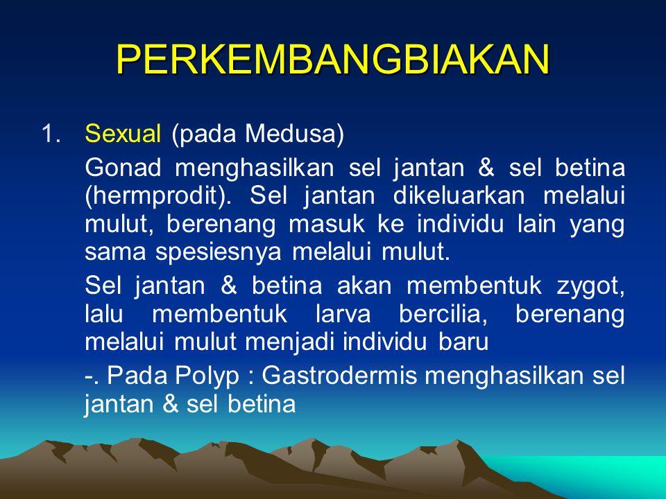 PERKEMBANGBIAKAN Sexual (pada Medusa)