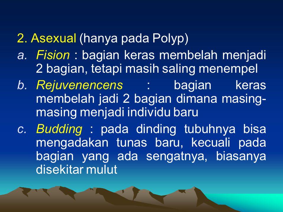 2. Asexual (hanya pada Polyp)