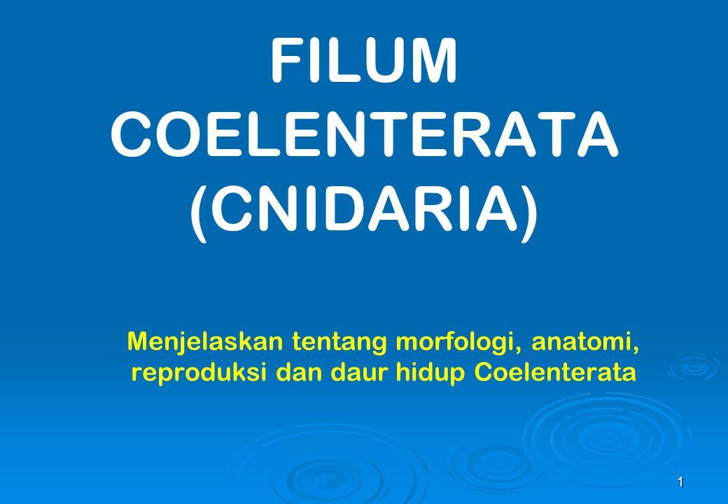 FILUM COELENTERATA (CNIDARIA)
