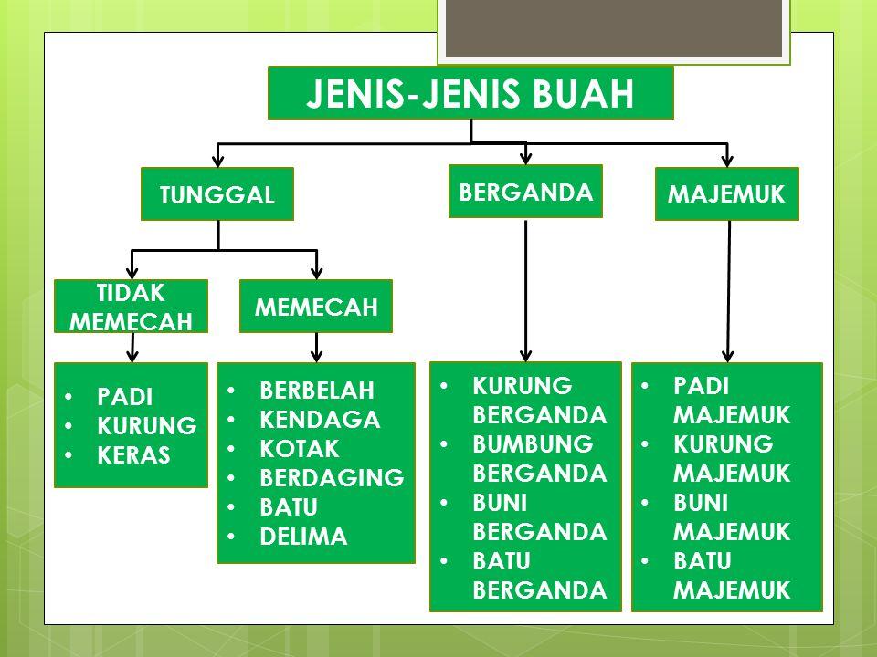 JENIS-JENIS BUAH BERGANDA TUNGGAL MAJEMUK TIDAK MEMECAH MEMECAH