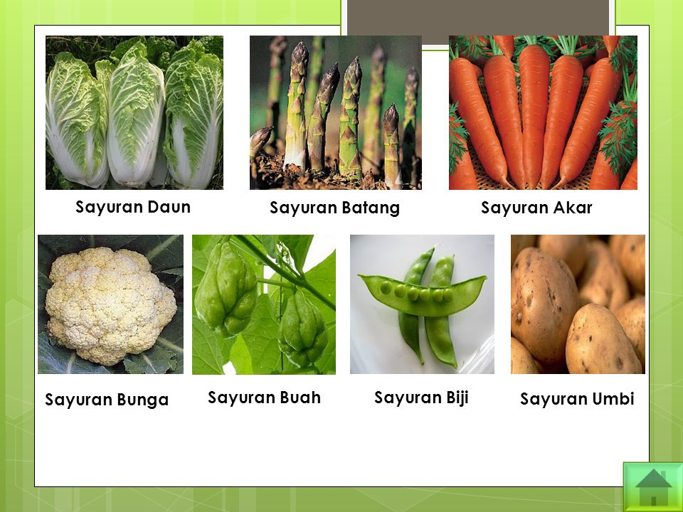 Sayuran Daun Sayuran Batang Sayuran Akar Sayuran Bunga Sayuran Buah Sayuran Biji Sayuran Umbi