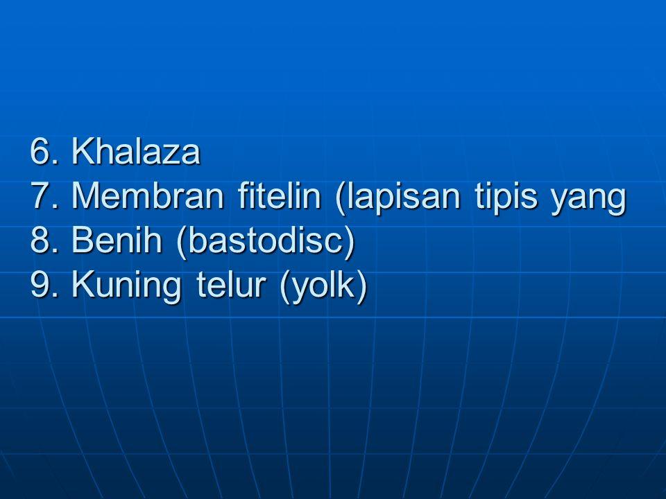 6. Khalaza 7. Membran fitelin (lapisan tipis yang 8