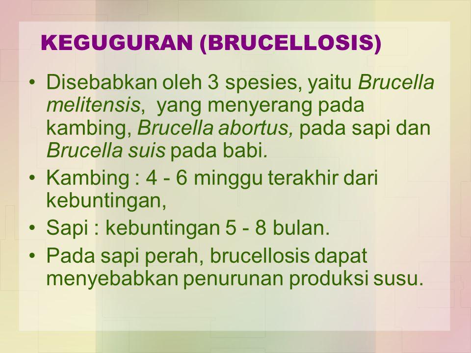 KEGUGURAN (BRUCELLOSIS)