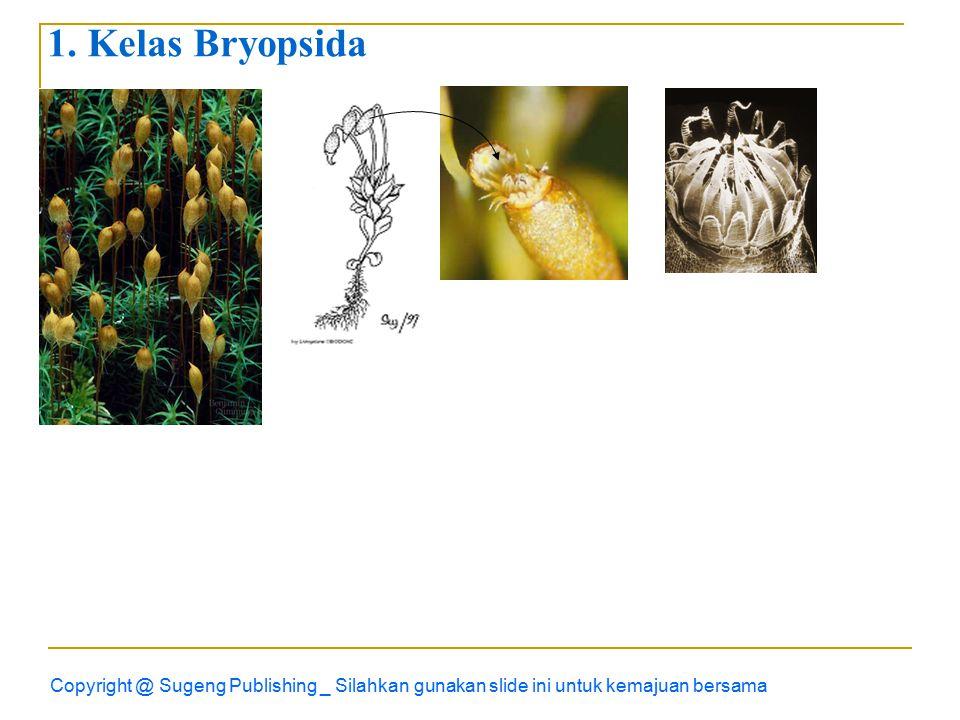 1. Kelas Bryopsida