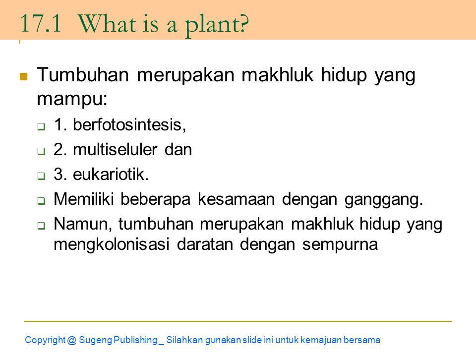 17.1 What is a plant Tumbuhan merupakan makhluk hidup yang mampu:
