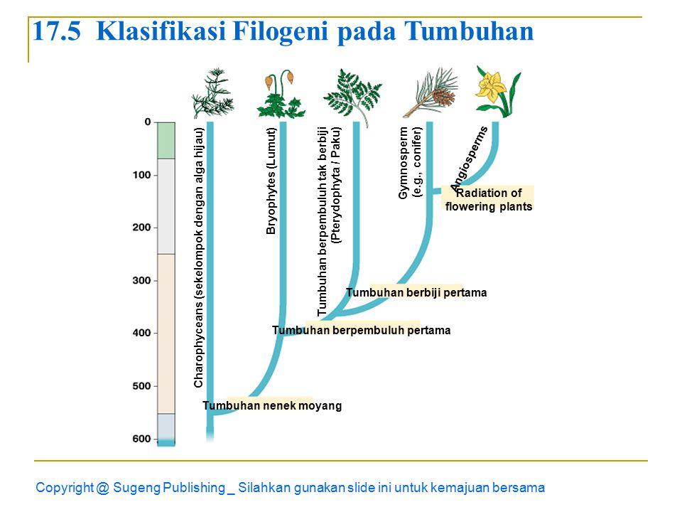 17.5 Klasifikasi Filogeni pada Tumbuhan