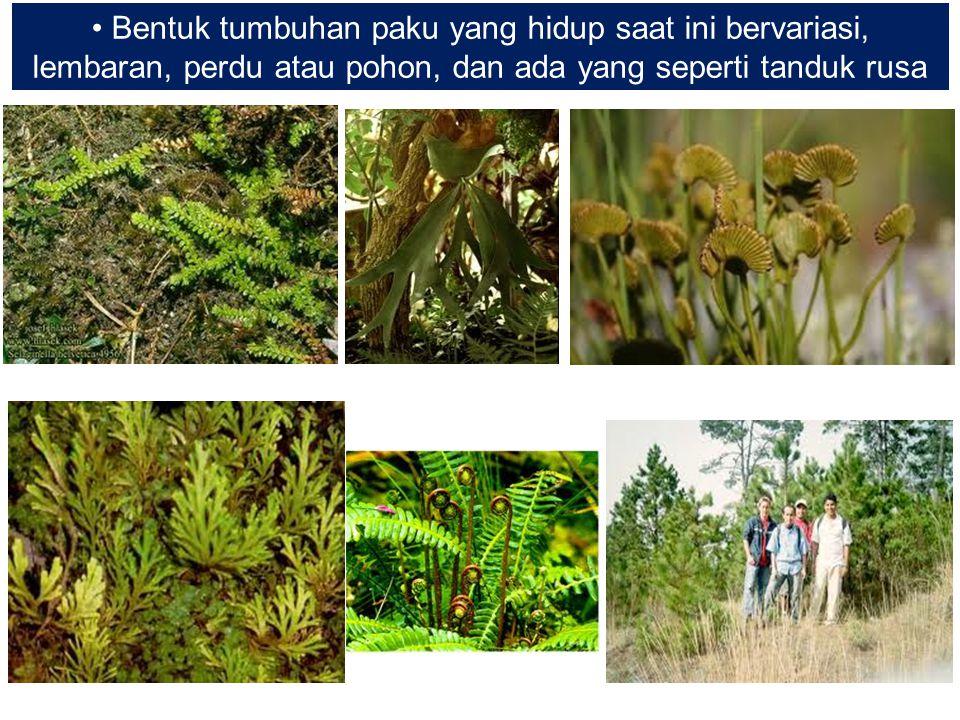 Bentuk tumbuhan paku yang hidup saat ini bervariasi, lembaran, perdu atau pohon, dan ada yang seperti tanduk rusa