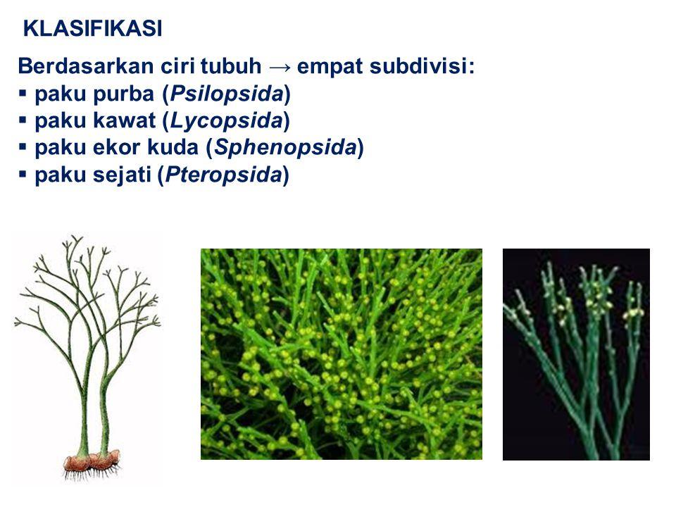 KLASIFIKASI Berdasarkan ciri tubuh → empat subdivisi: paku purba (Psilopsida) paku kawat (Lycopsida)