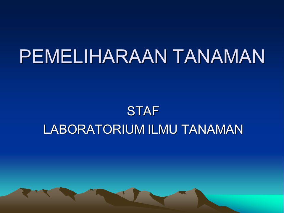 STAF LABORATORIUM ILMU TANAMAN