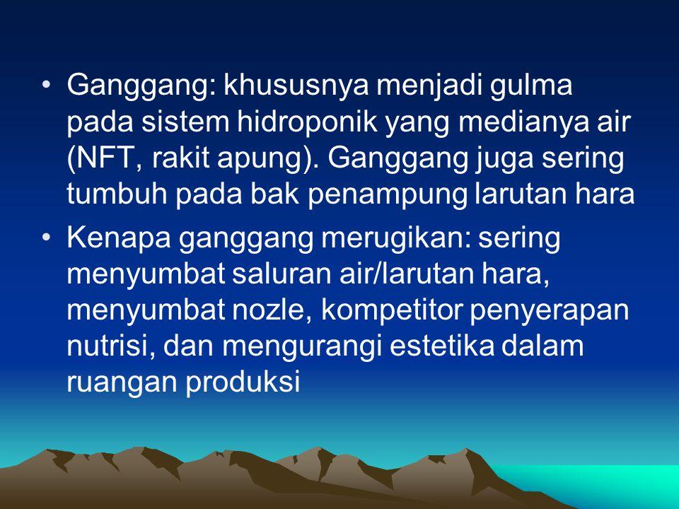 Ganggang: khususnya menjadi gulma pada sistem hidroponik yang medianya air (NFT, rakit apung). Ganggang juga sering tumbuh pada bak penampung larutan hara