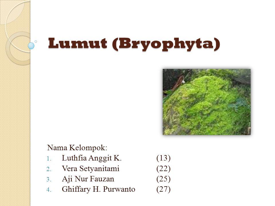 Lumut (Bryophyta) Nama Kelompok: Luthfia Anggit K. (13)