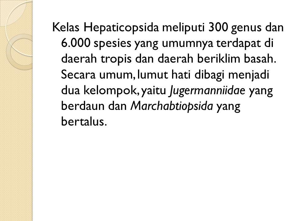 Kelas Hepaticopsida meliputi 300 genus dan 6