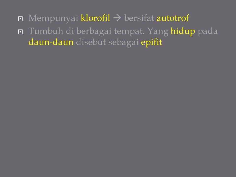 Mempunyai klorofil  bersifat autotrof