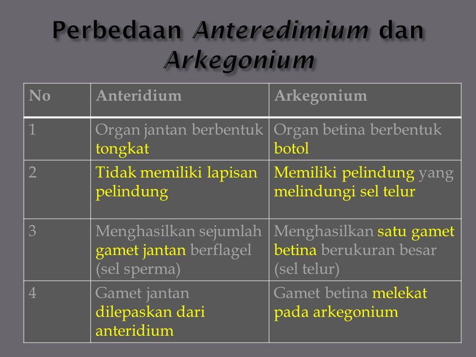 Perbedaan Anteredimium dan Arkegonium