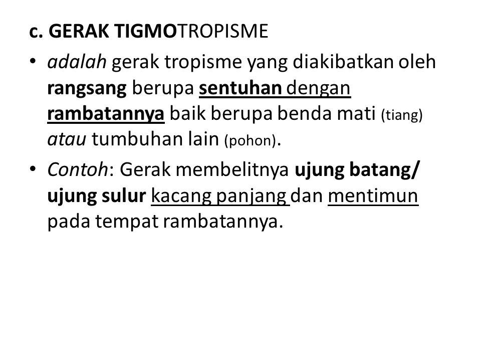c. GERAK TIGMOTROPISME