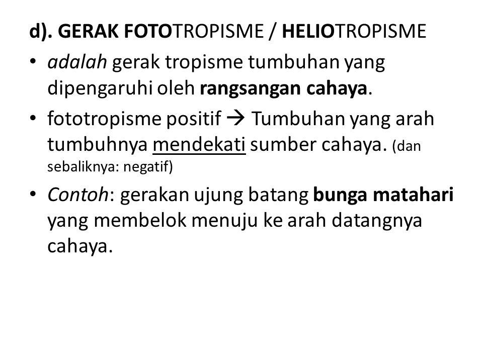 d). GERAK FOTOTROPISME / HELIOTROPISME