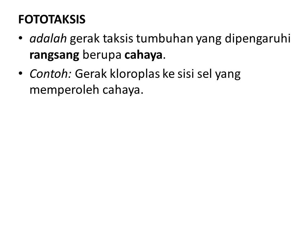 FOTOTAKSIS adalah gerak taksis tumbuhan yang dipengaruhi rangsang berupa cahaya.