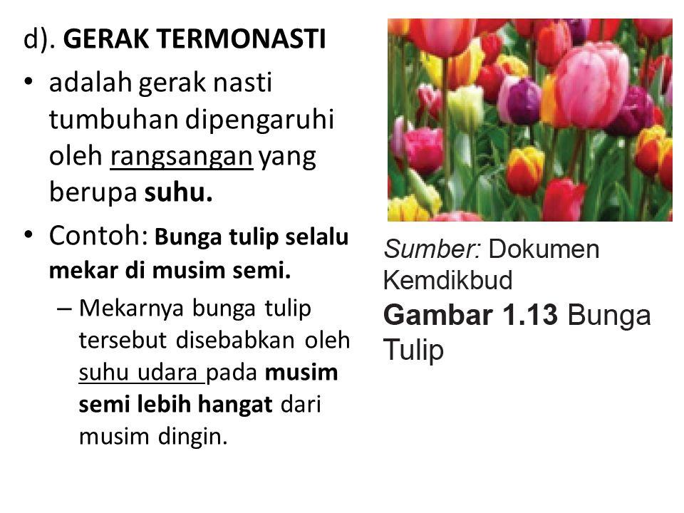 Contoh: Bunga tulip selalu mekar di musim semi.