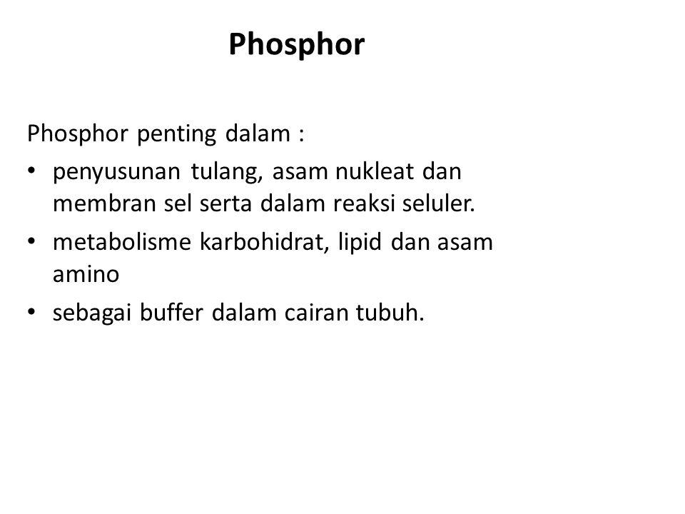 Phosphor Phosphor penting dalam :
