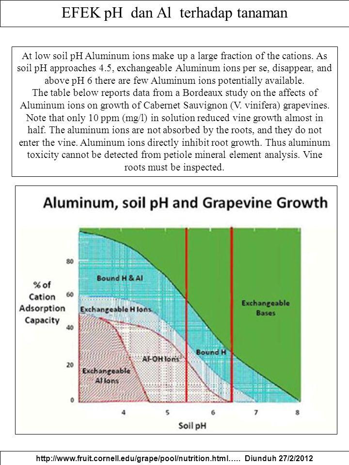 EFEK pH dan Al terhadap tanaman