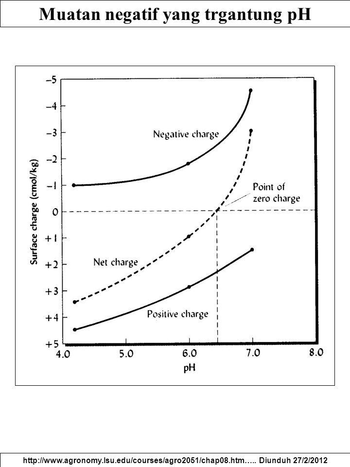 Muatan negatif yang trgantung pH
