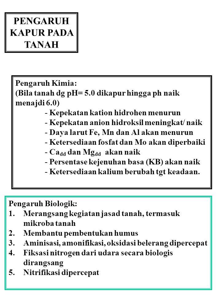 PENGARUH KAPUR PADA TANAH