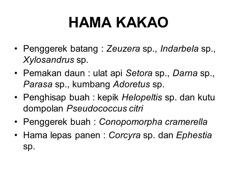 HAMA KAKAO Penggerek batang : Zeuzera sp., Indarbela sp., Xylosandrus sp.