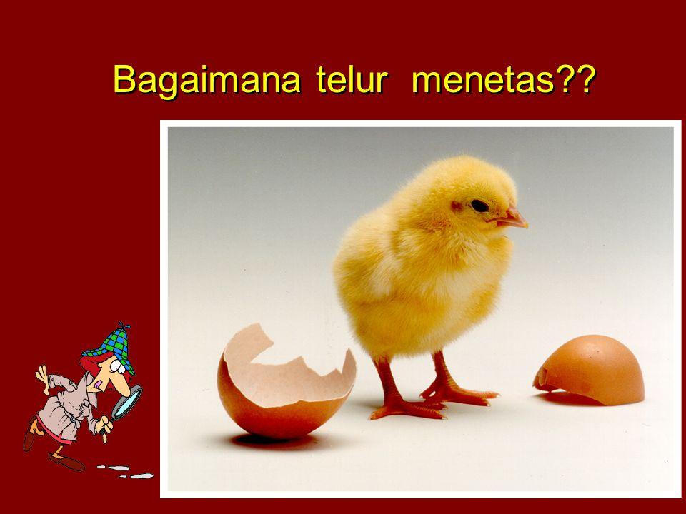 Bagaimana telur menetas