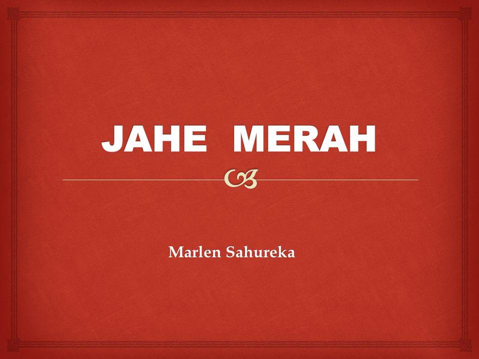 JAHE MERAH Marlen Sahureka